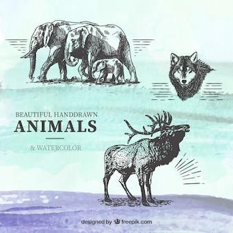 Animales dibujados a mano sobre fondo de acuarela