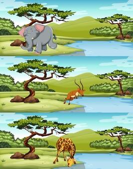 Animales salvajes viven por el lago ilustración