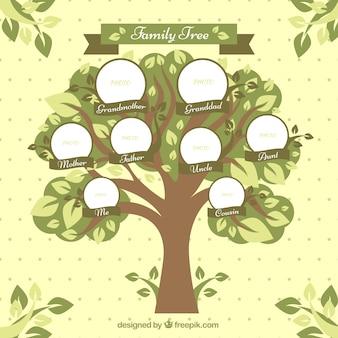 Árbol genealógico con círculos y hojas decorativas