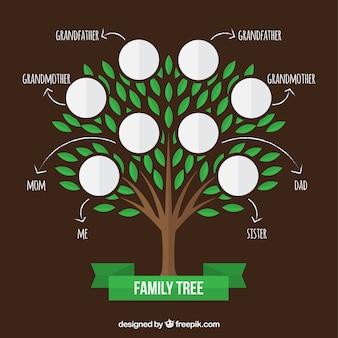 Árbol genealógico con hojas verdes y flechas