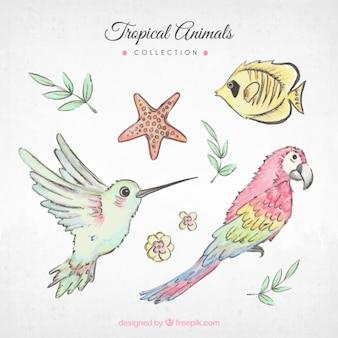 Aves exóticas pintadas a mano y otros animales