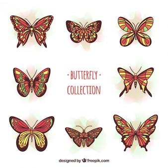Bellas mariposas en tonos rojos con detalles amarillos
