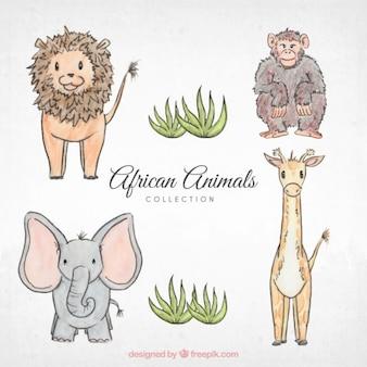 Bocetos de animales africanos