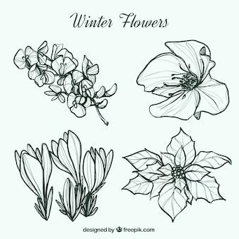 Bocetos de flores de invierno