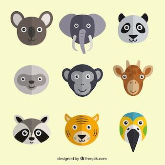 Bonitas cabezas de animales