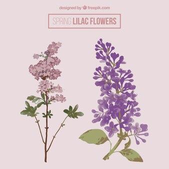 Bonitas flores lilas