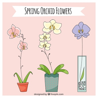 Bonitas orquídeas de primavera