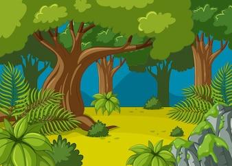 Bosque escena con árboles grandes