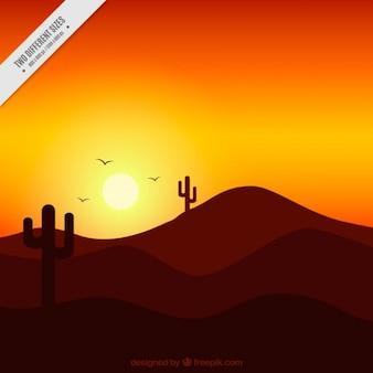 Cactus solitarios al atardecer