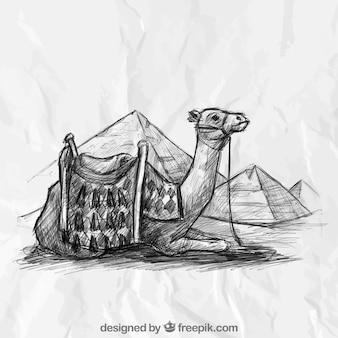 Camello dibujado a mano y pirámides egipcias