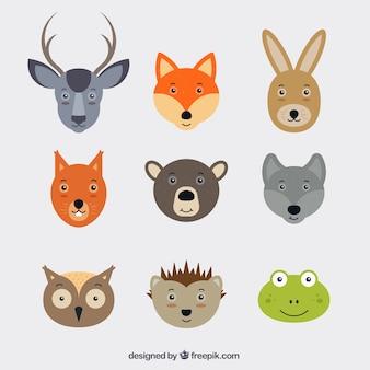 Caras bonitas de animales
