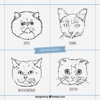 Caras de razas de gato esbozadas
