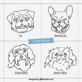Caras de razas de perros esbozadas