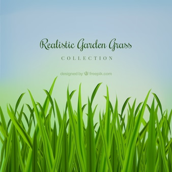 Césped de jardín realista