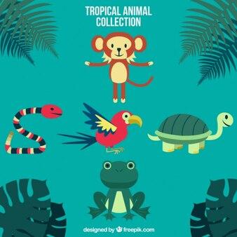 Colección de animales salvajes divertidos