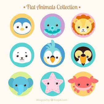 colección de animales salvajes y marinos