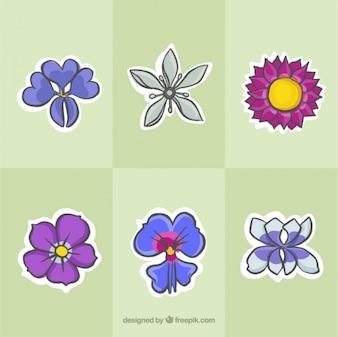 Colección de bocetos de flores salvajes de colores