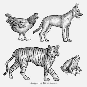 Colección de bosquejos de animales