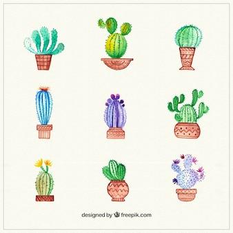 Colección de cactus pintados a mano