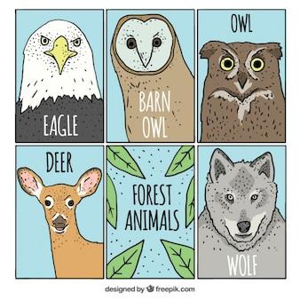 Colección de cartas de animales dibujadas a mano
