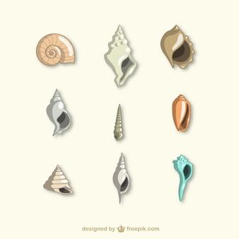 Colección de conchas de mar