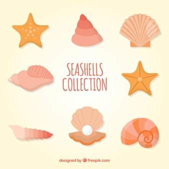 Colección de conchas marinas a color