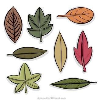 Colección de diferentes tipos de hojas