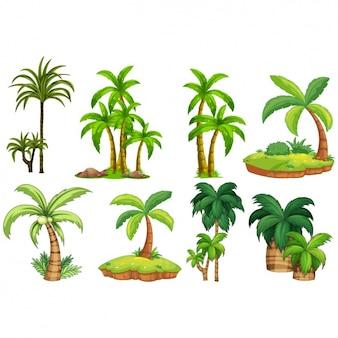 Colección de diseños de palmeras