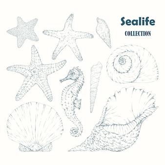 Colección de elementos de la vida marina