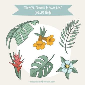 Colección de flores tropicales y hojas de palmera