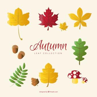 Colección de hojas con bellotas y setas
