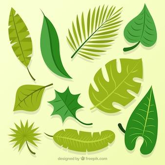 Colección de hojas de palmeras dibujadas a mano
