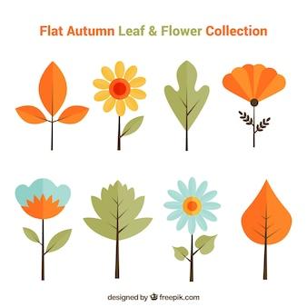 Colección de hojas y flores de otoño