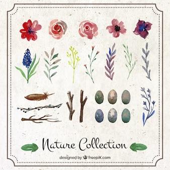 Colección de naturaleza pintada a mano
