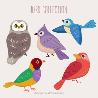Colección de pájaros de colores