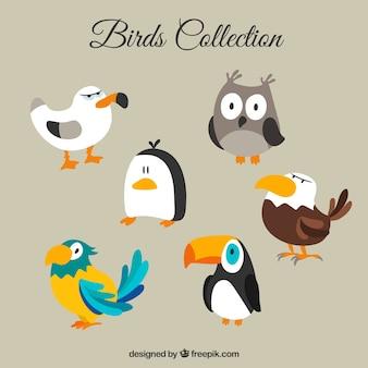 Colección de pájaros divertidos de dibujos