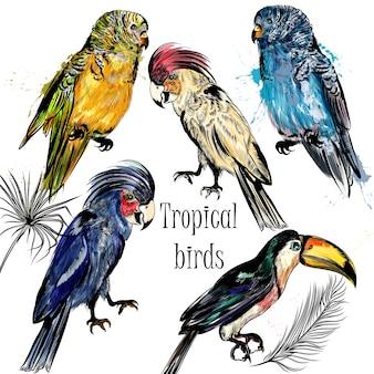 Colección de pájaros tropicales