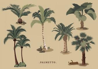 Colección de palmeras