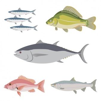 Colección de pescados a color