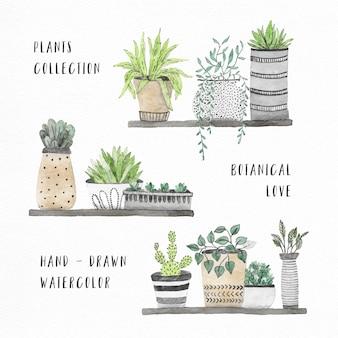 Colección de plantas de la casa en acuarela