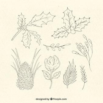 Colección de plantas típicas de navidad