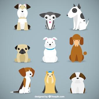 Colección de razas de perro
