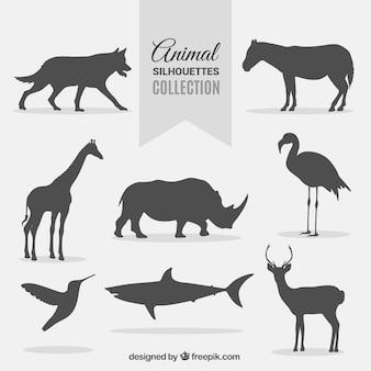 Colección de siluetas de animales salvajes