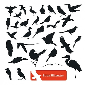 Colección de siluetas de pájaros