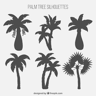 Colección de siluetas de palmeras