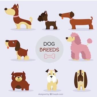 Colección de simpáticas razas de perro