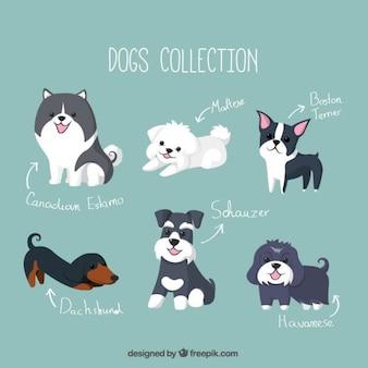 Colección de simpáticos cachorros