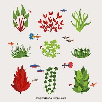 Colección de tipos de algas y peces