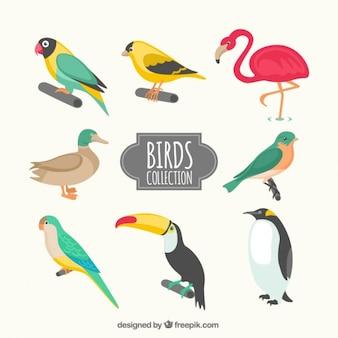 Colección de tipos de pájaros