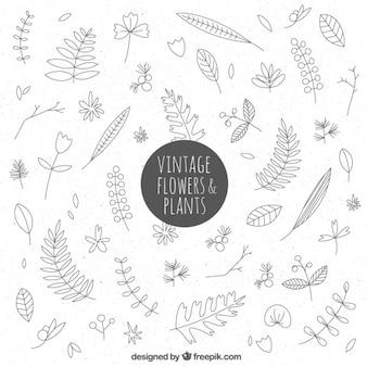 Colección dibujada a mano vintage de flores y hojas